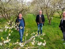 Pruimenboomgaard in Driel gered van kaalslag: 'Ik was op slag verliefd'