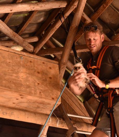 Vogelbeschermers zoeken geld om de steenuil aan nieuwe kasten te helpen