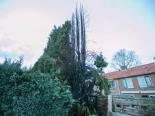 Coniferen branden af in achtertuin in Doorwerth