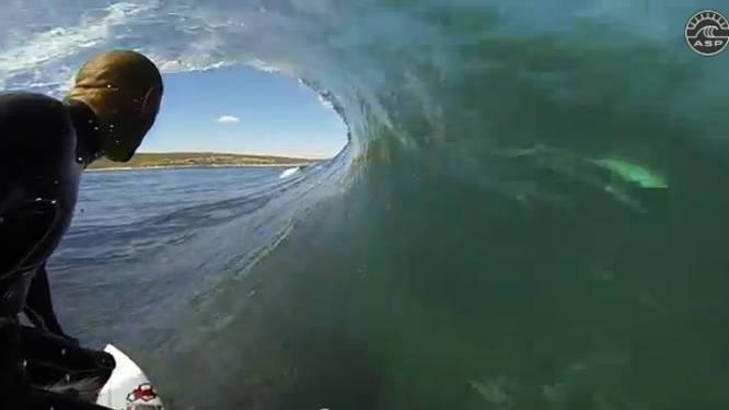 Wereldkampioen surfen oog in oog met witte haai?