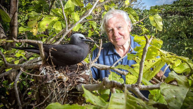 David Attenborough Beeld BBC