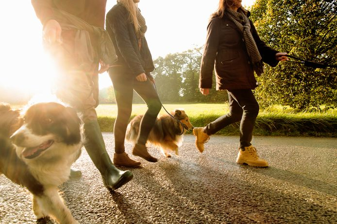 Wandelen is tegenwoordig razend populair, vooral door het vele thuiszitten in coronatijd.