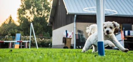 Hondenvereniging zet zich al 100 jaar in voor honden en hun baasjes