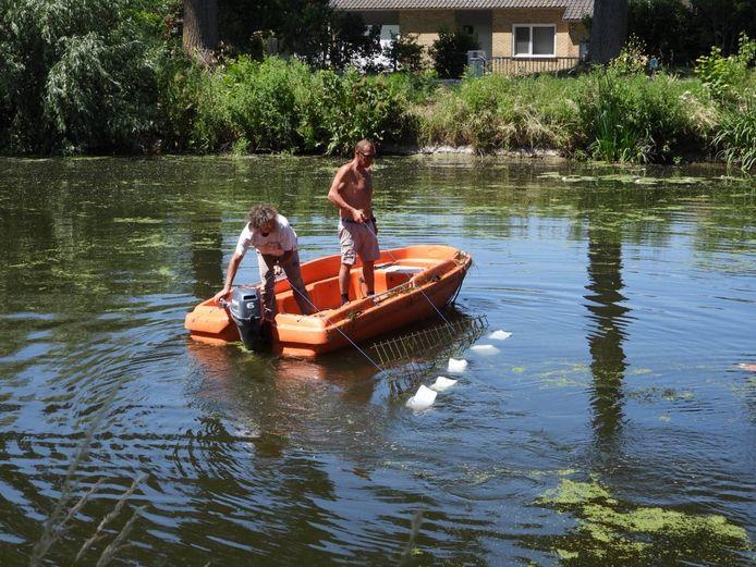De Langerei Zwemmers verwijderen waterplanten in de Damse Vaart om beter te kunnen zwemmen.