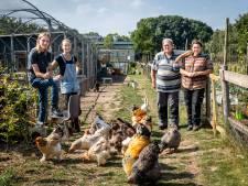 Stadstuin Helmond is veel meer dan alleen tuin: 'Niet iedereen heeft geld om groenten te kopen'