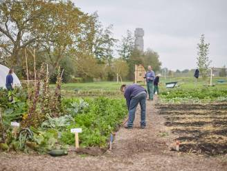 Van bubbelpicknick tot boerenmarkt: Diksmuide zet week lokale specialiteiten in de kijker