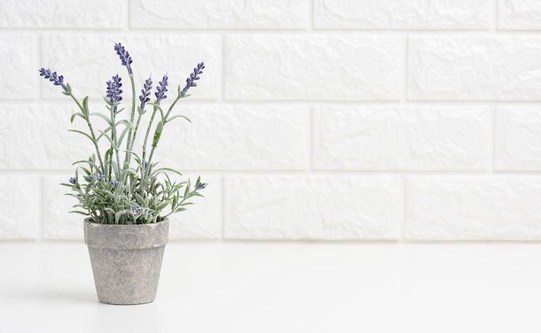 Lavendel Beeld Getty Images