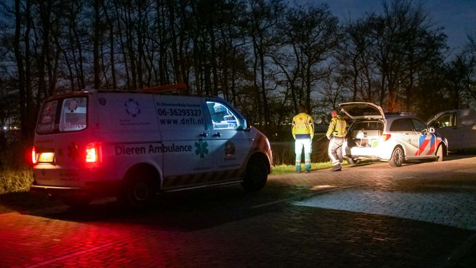 Politie en Dieren Noodhulp Flevoland doen onderzoek in Biddinghuizen.