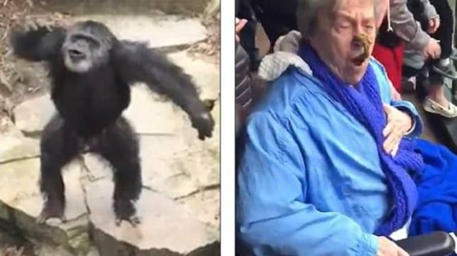Jong meisje gevonden tussen de apen: Ze kroop naakt op