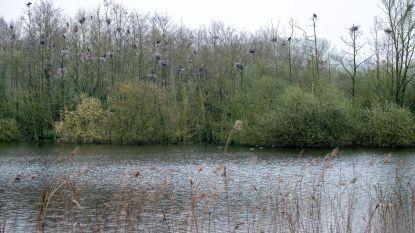 Kolonie aalscholvers baart vissers zorgen