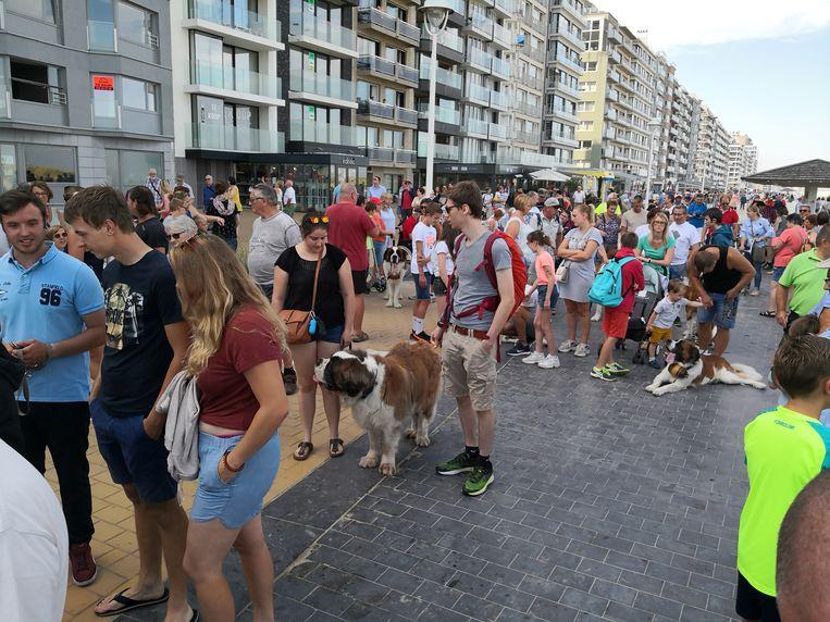 De 50ste Sint-Bernardusfeesten in Nieuwpoort-Bad.  Veel volk op de wandeling met Sint-Bernardushonden