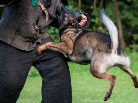 Honden wijken voor nieuwe afslag in Zevenaar
