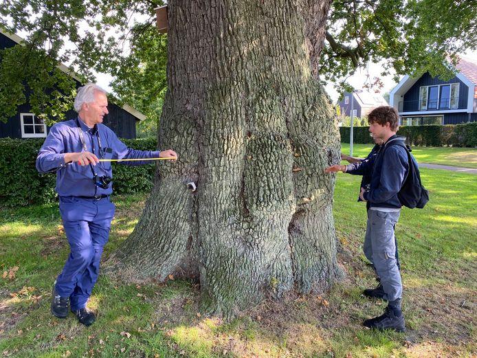 Leden van de Landelijke Bomenstichting meten de eik op aan de Brinkweg in Delden. Links Jeroen Philippona.