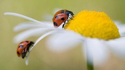 Zorgwekkend: aantal insecten in Europa drastisch gedaald