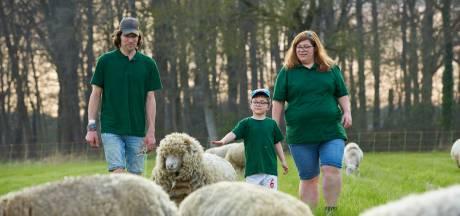 Schapen vervangen ook dit jaar de grasmaaier in Zutphense woonwijken: 'Mensen zijn zo positief'