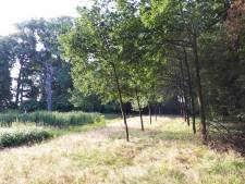'Herdenkingsbomen in Land van Ooit worden niet gekapt'