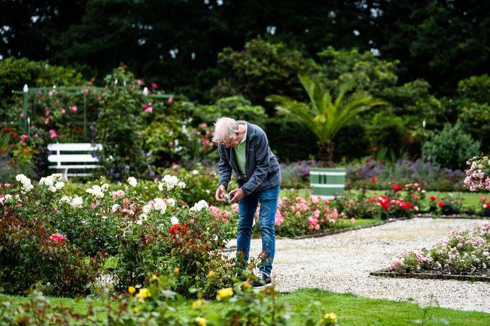 Een Groningse toerist fotografeert rozen in de kasteeltuin van Middachten in De Steeg.