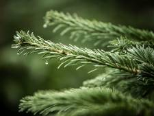 Deel opbrengst kerstbomenactie Woerden gaat naar dít goede doel!