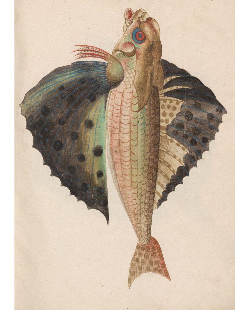 Vliegende vis, voor 1558, Conrad Gessner en Felix Platter Beeld