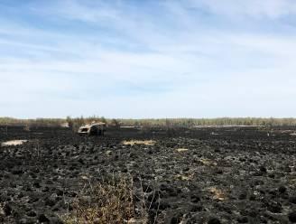 """""""Een barbecue voor reigers en buizerds"""": boswachter Groot Schietveld meet schade op na natuurbrand"""