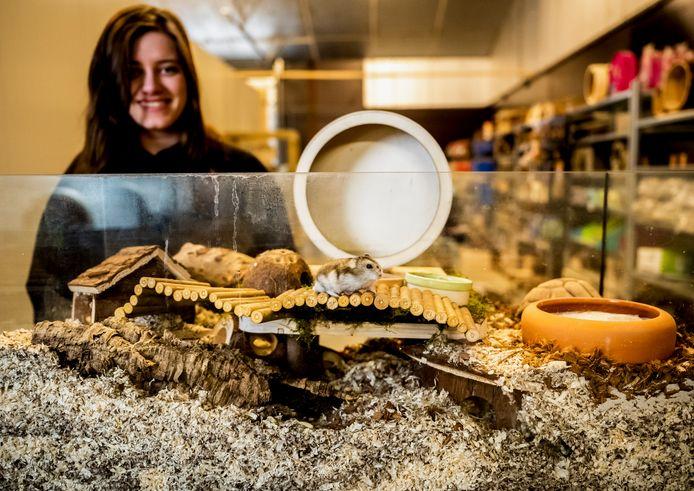 Esmée van Leeuwen maakt de kleine paleisjes voor de knaagdieren.