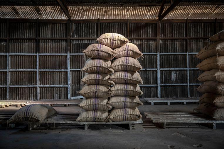 Cacaobonen wachten op transport vanuit Ghana. Beeld Sven Torfinn