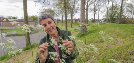 Woede over rigoureus maaibeleid in Yerseke: 'De kop van elk bloemetje moet worden afgehakt'