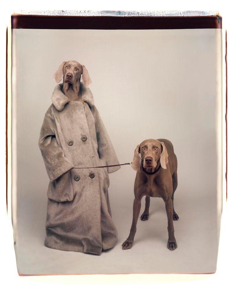 'Dog Walker' (1990). Beeld William Wegman