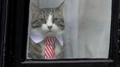Julian Assange werd opgepakt, maar wat gebeurde er met zijn kat?