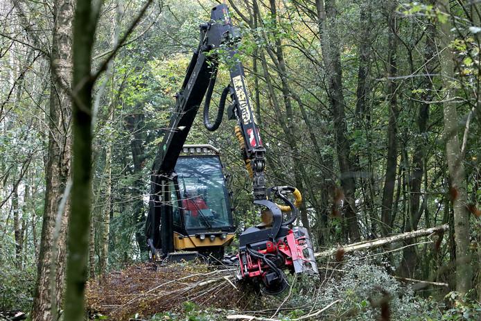 Voor de houtkap wordt groot materieel ingezet.