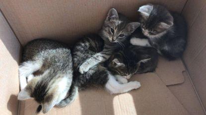 Politie, uw (dieren)vriend: agenten geven kittens nieuwe thuis
