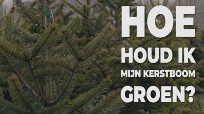5 tips om je kerstboom groen te houden!