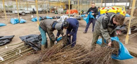 Kou nekt planters gratis bomen in Willemsoord