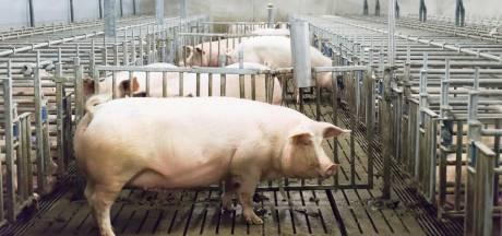 Deurnese varkenshouder naar Raad van State om woning naast stal tegen te houden