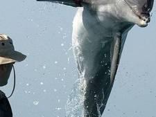 """Méli-mélo autour de la disparition de """"dauphins-tueurs"""" en Ukraine"""