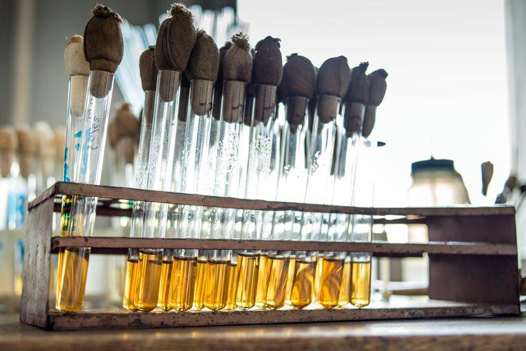 Bacteriofagen in een Georgisch laboratorium. Beeld Hollandse Hoogte
