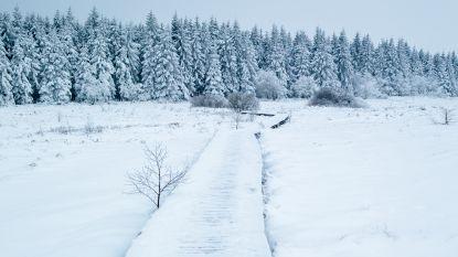 Als het sneeuwt, gaan we naar de Hoge Venen
