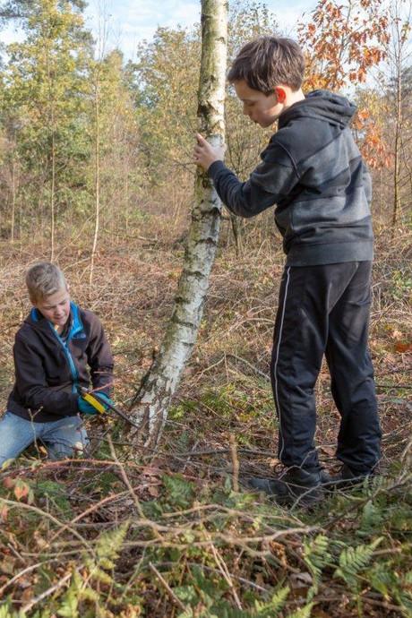 Scouting Overloon helpt de natuur een handje in de Loonse Duinen