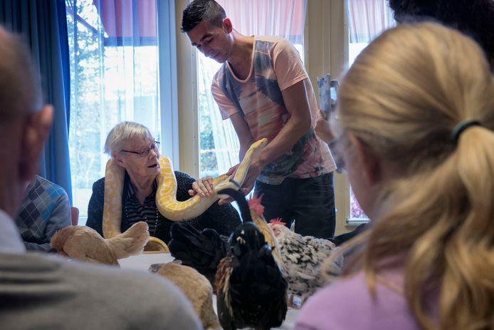 Mevrouw Van Bruggen die de python om haar nek krijgt van Perry Mijs.