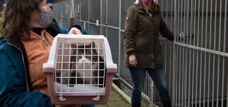 Bijna geen dieren meer te vinden in Utrechtse asiels: 'We hebben binnen tien minuten vaak al vier reacties'