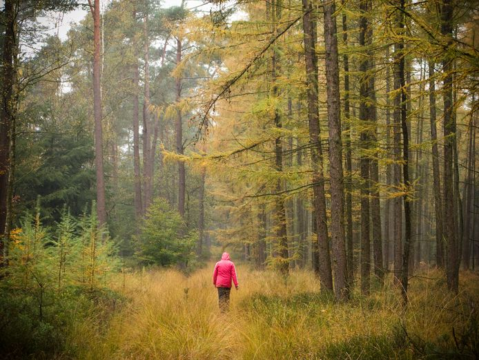 Bos op de Veluwe.