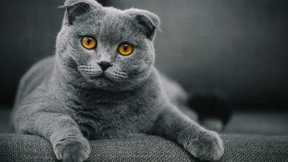 Brussels Gewest verbiedt enkele kattensoorten