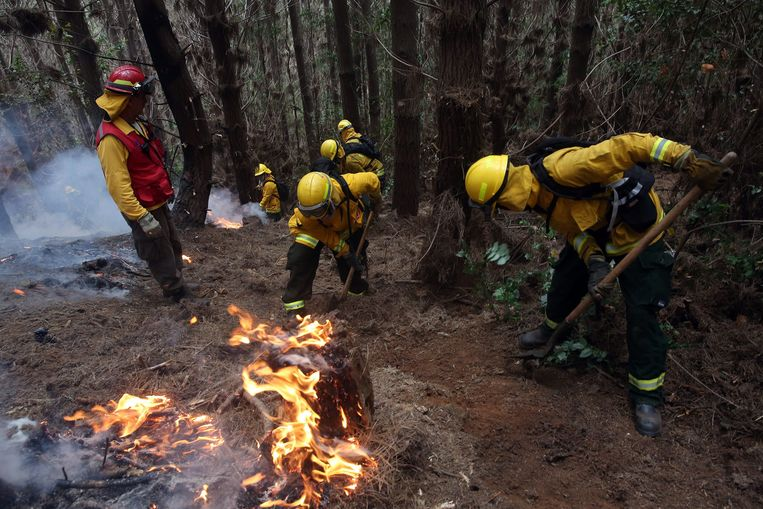 Brandweermannen proberen het vuur onder controle te krijgen.  Beeld EPA
