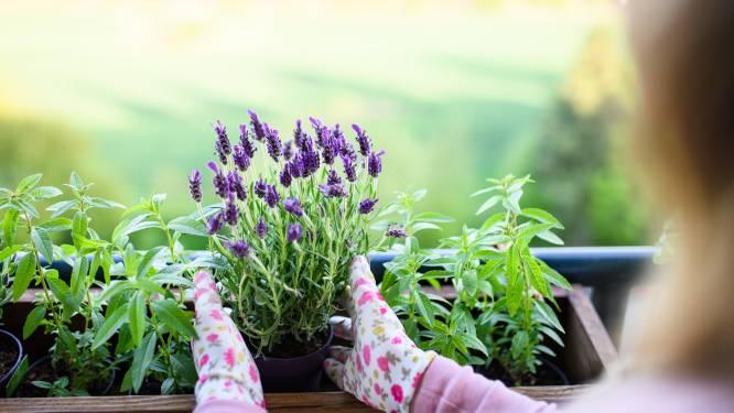 Je tuin aanleggen met een klein budget? Dat doe je met deze tips