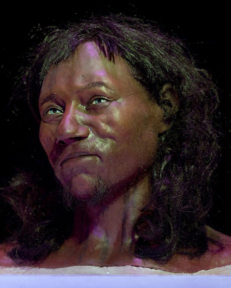 De 'Cheddar Man', de reconstructie van een 10.000 jaar oude Brit, in het Londense Natural History Museum. Beeld AFP