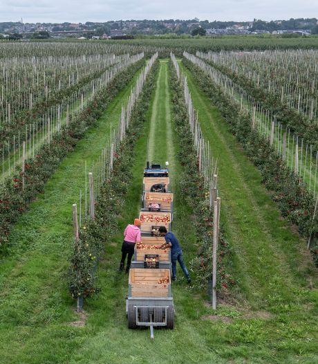 Appels plukken met zicht op Cuneratoren aan de overkant