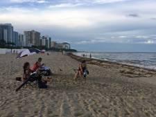 Oud-burgemeester Miami: 'We moeten een voorbeeld nemen aan Rotterdam want daar hebben ze duinen'