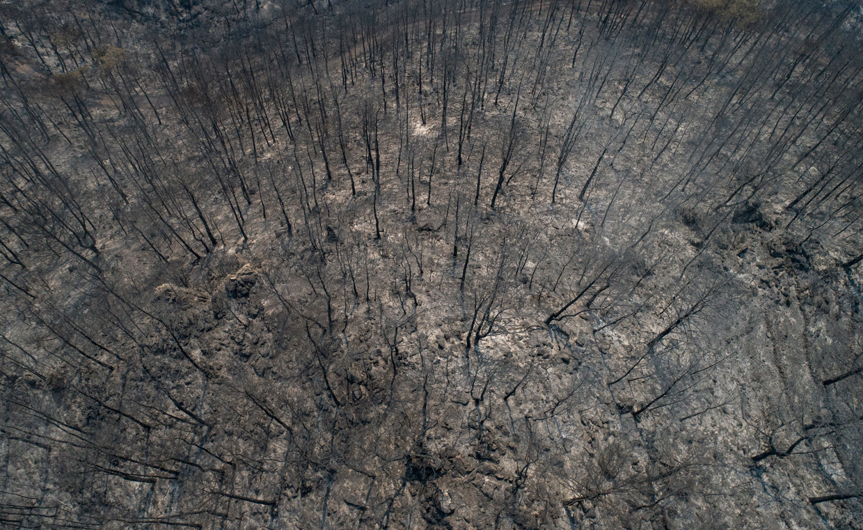 Verbrande bomen vlakbij Marmaris.