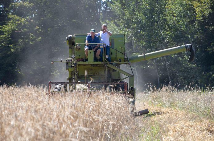 De oogst op het Westbergveld, rechts initiatiefnemer Marcel van Silfhout.