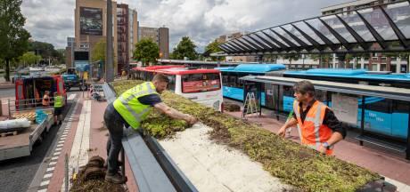 Waarom je in Wageningen op de bus wacht onder een dak van sedum